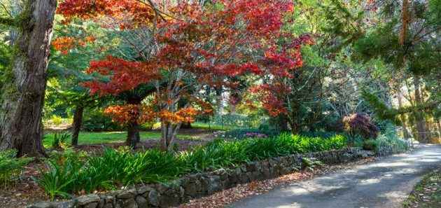 Autumn colours in the Blue Mountains